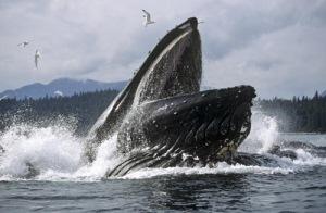__whale