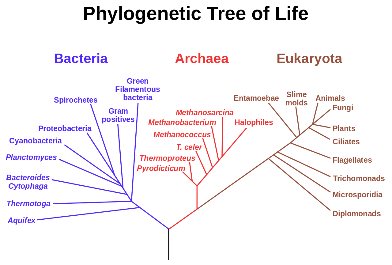1280px-phylogenetic_tree-svg